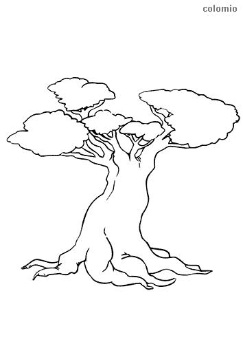 Baum mit dickem Stamm Ausmalbild