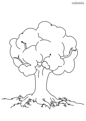 Baum mit großer Krone Ausmalbild