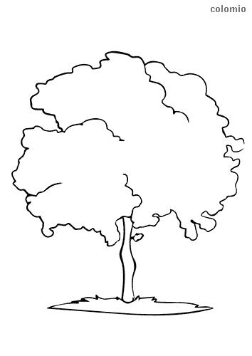 Baum mit schmalem Stamm Malvorlage