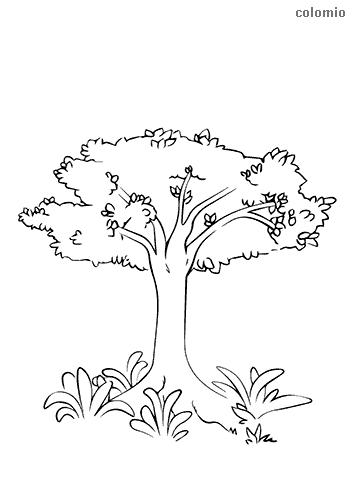Baum mit Sträuchern Malvorlage