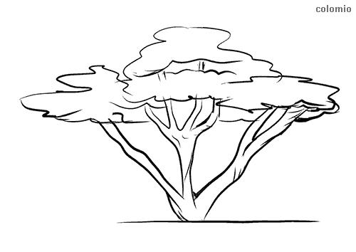Mehrstämmiger Baum Ausmalbild