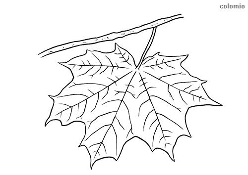 Ahornblatt Malvorlage