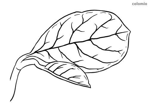 Jackfrucht Jakobsfrucht Blatt Malvorlage