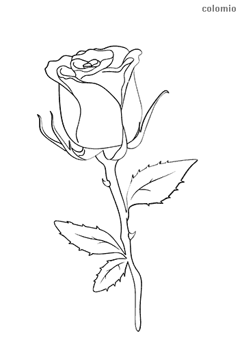 Rose mit Stiel Ausmalbild