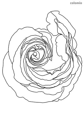 Rose von oben Malvorlage