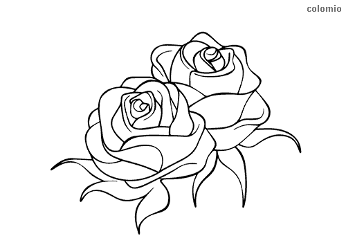 Rosenpaar ohne Dornen Ausmalbild