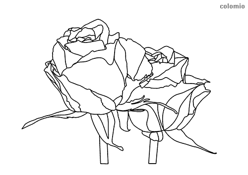 Rosenpaar Ausmalbild