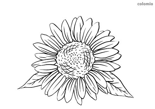 Sonnenblume mit Blättern Ausmalbild
