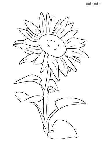 Sonnenblume mit stehendem Kopf Ausmalbild