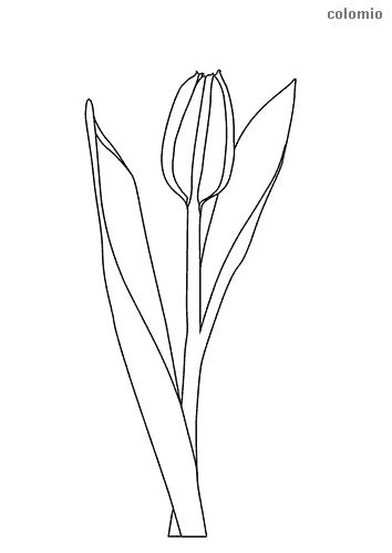 Tulpe mit Stiel Ausmalbild