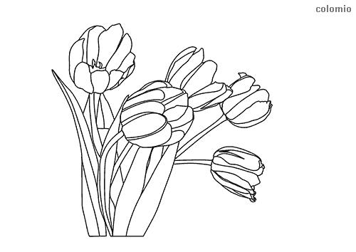 Tulpen mit Stiel Ausmalbild