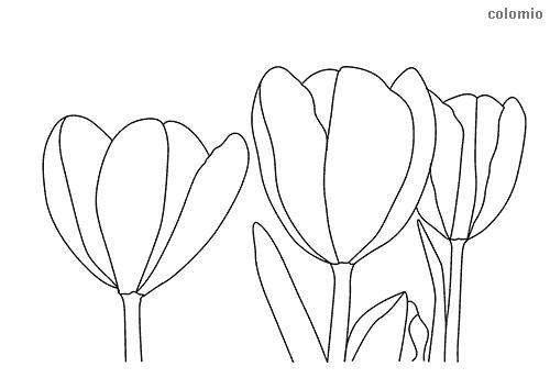 Tulpen Ausmalbild