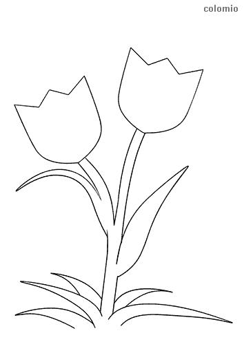 Tulpenpaar Ausmalbild