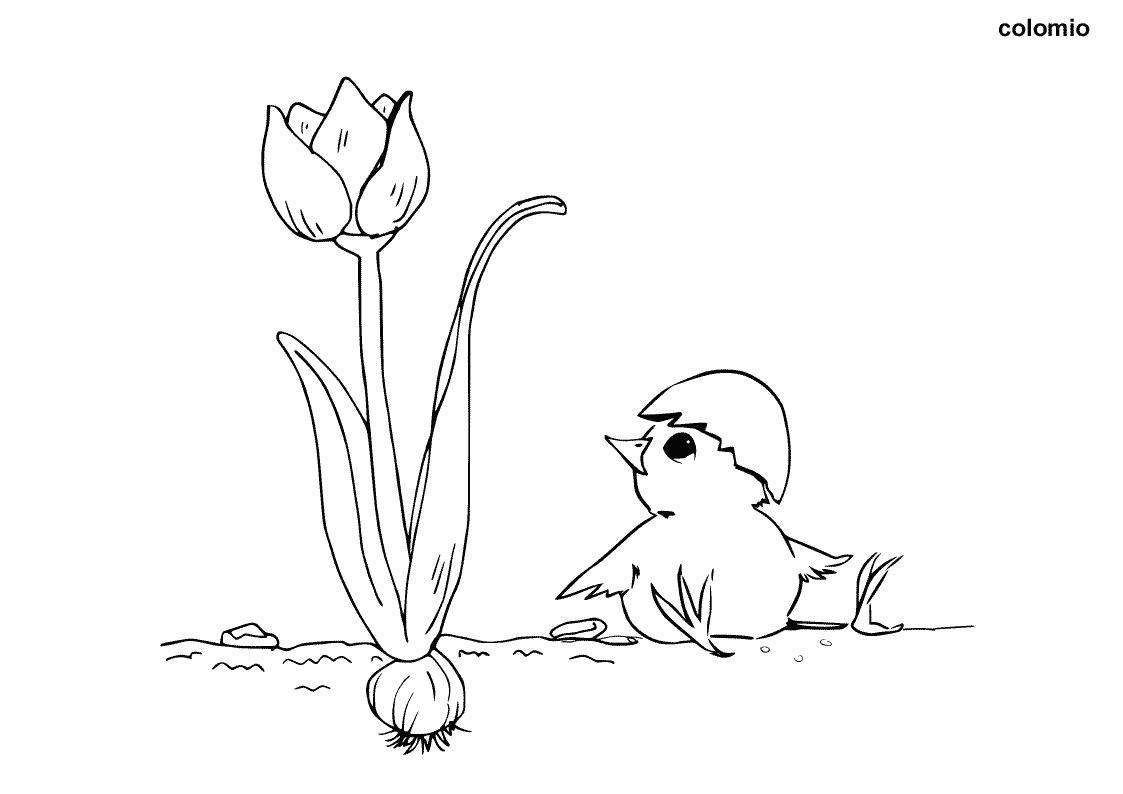 Küken mit Blume Malvorlage