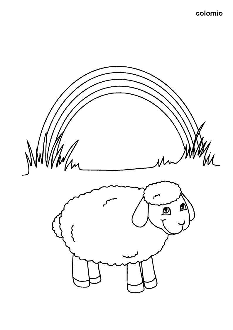 Lamm mit Regenbogen Ausmalbild