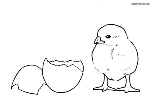Küken mit Eierschale