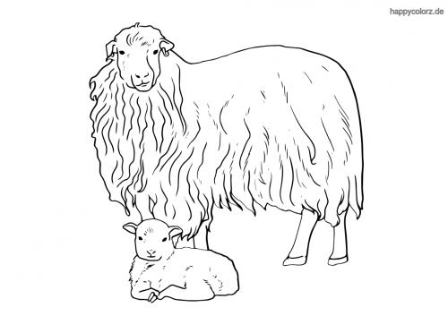 Schaf mit Lamm Malvorlage