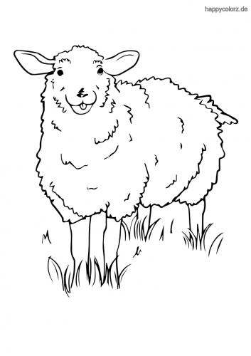Schaf mit Wiese Ausmalbild