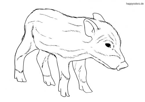 Wildschwein-Frischling Ausmalbild
