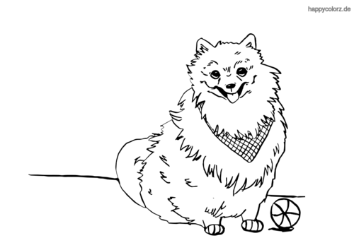 Pomeranian Malvorlage