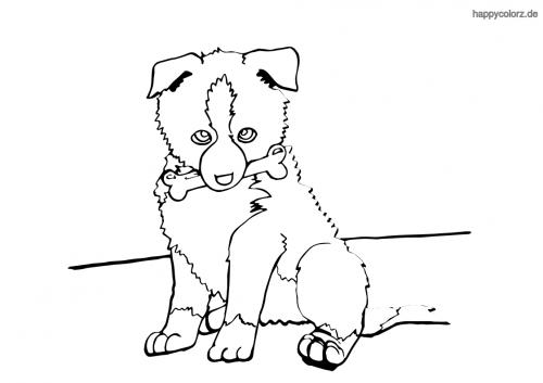 Sheltie Welpe (Shetland Sheepdog) ausmalen