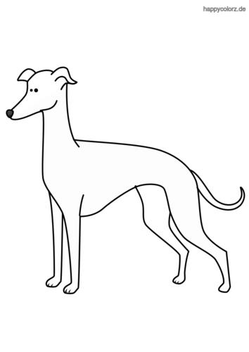Windhund Ausmalbild