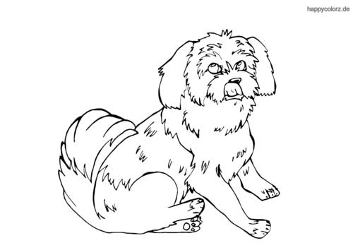 Yorkshire Terrier Ausmalbild