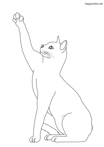 Katze Schnell Zeichnen Lernen How To Draw
