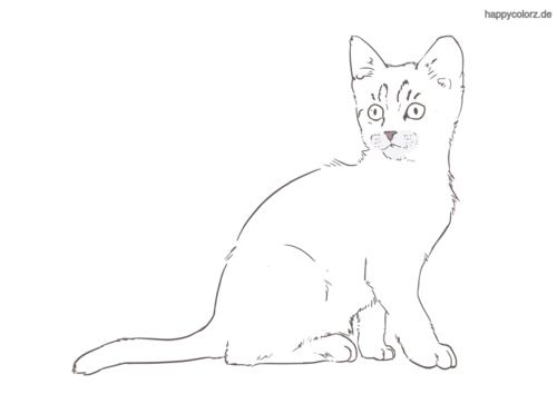 sitzendes Kätzchen Ausmalbild