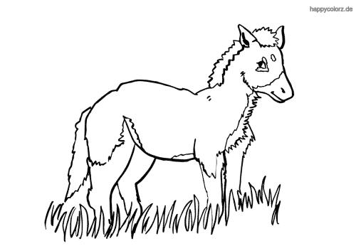 Fohlen im Gras ausmalen