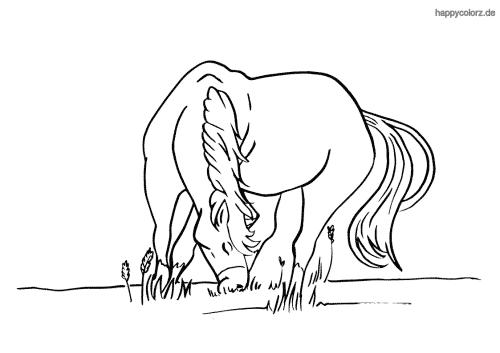 Grasendes Pferd Malvorlage