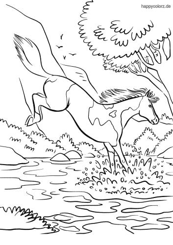 Pferd am Fluss Malvorlage