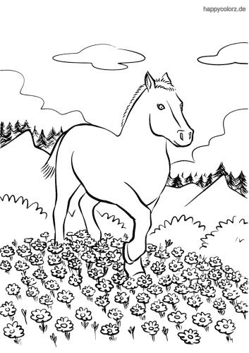 Pferd auf der Blumenwiese Malvorlage