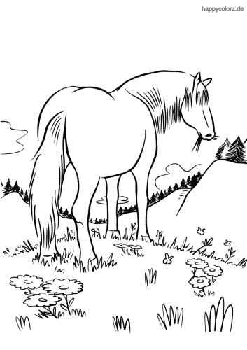 Pferd auf der Weide Ausmalbild