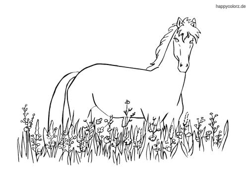 Pferd in der Wiese Ausmalbild