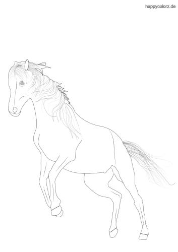 Hier findest du tolle Ausmalbilder von Pferden.