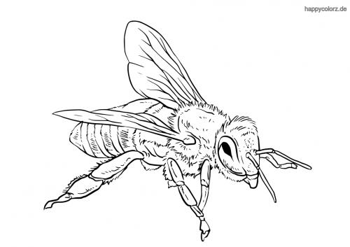 Honigbiene Malvorlage