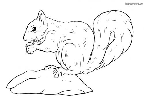 Eichhörnchen frisst Ausmalbild