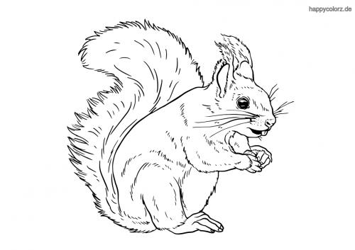 Eichhörnchen knabbert Ausmalbild