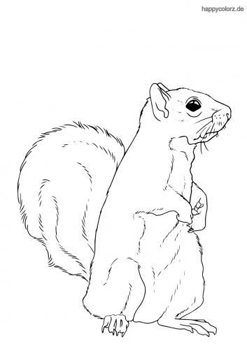 Eichhörnchen Ausmalbild