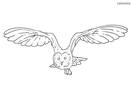 Ausmalbild Eule im Flug