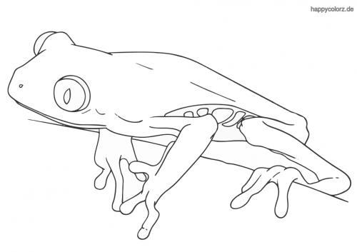 Rotaugenlaubfrosch Ausmalbild
