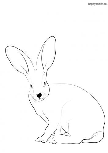Hase mit großen Ohren Malvorlage