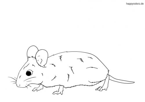 Schnuppernde Maus ausmalen