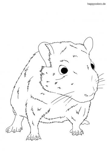 Weiße Maus Malvorlage