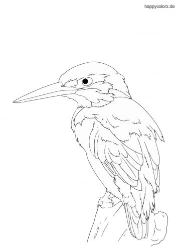 Eisvogel Ausmalbild