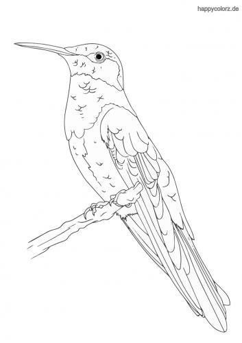 Kolibri auf Zweig Ausmalbild