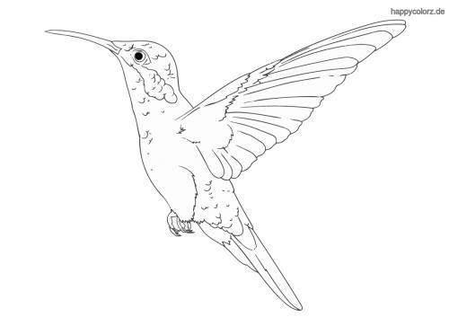 Kolibri im Flug Ausmalbild