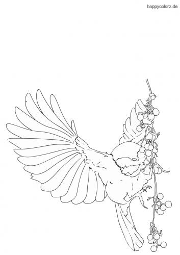 Vogel frisst Beeren Ausmalbild