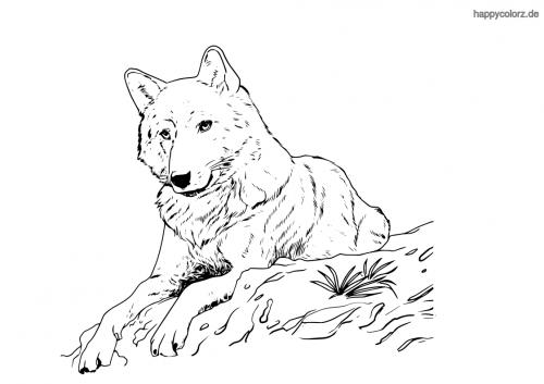 Sitzender Wolf Malvorlage